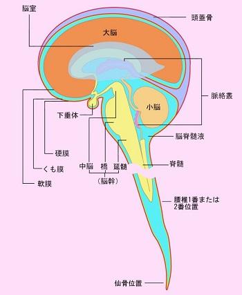 脊髄炎と急性散在性脳脊髄炎の症...